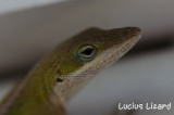 Lucius Lizard-25.jpg