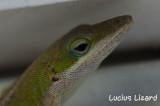 Lucius Lizard-44.jpg