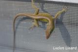 Lucius Lizard-202.jpg