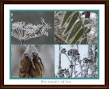 The Ephemera of Frost and Ice