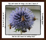 The reason for bees