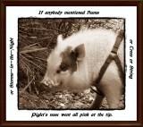 Piglet's nose