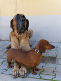 Giove & Golia