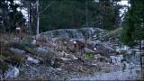 Deer 121106