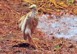 Ballett Heron
