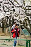 Sakura, Young Father and Daughter
