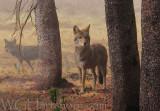 Wylie E. Coyote
