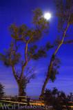 Silhouettes of Twilight
