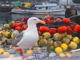 Ports Of Gull