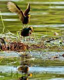 birds_of_belize