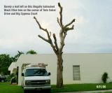Tree Abuse Gallery:  The Butchered and Disappearing Trees in the Town of Miami Lakes, FL