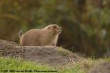 October 26, 2012: Diergaarde Blijdorp (NL)