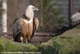 February 2, 2013: Tierpark Nordhorn (D)