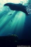 Rays of Light - Georgia Aquarium
