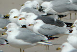 Gull Galleries