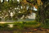 Lake Overstreet.  Tallahassee, Florida