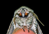 Black & White Moth