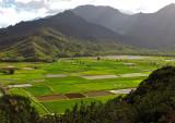 Hanalei-Lookout (Taro Fields)