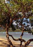 Beach-Through-Tree