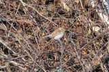 _-201.jpgfield sparrow main st wilmington