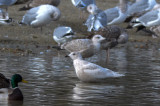 kumliens gull silver lake wilmington