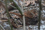 fox sparrow wilmington