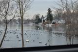 flax pond waterfowl