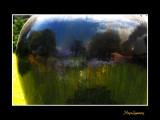 16_Henri_LIMOUSIN_nature reflet__MG_1124.jpg