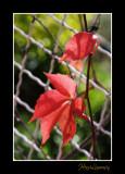 HL_MG_3614_nature fleur.jpg
