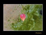 _MG_8491 nature.jpg