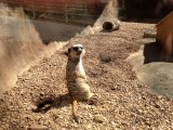 Knoxville Zoo/Dollywood 2013