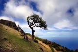 Madeira wide angled