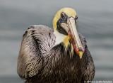 Florida Gulf Coast Wildlife
