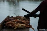 Anegada Lobsters 1