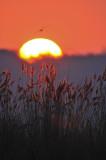 sunrise in het Vinne