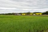 Farmscape Near Penhold