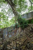 Old Fort, Old Tree