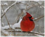 20121229-121_SnowW.jpg