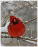 20121229-125_SnowW.jpg
