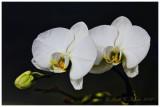 Orchids at Parkside