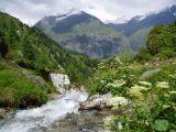 Wild mountain brook