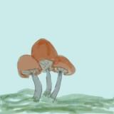 mushrooms-1_ellie_lesson1.jpg