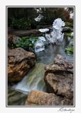 IMG_6325-Persian Pond.jpg
