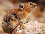 :: Wildlife ::