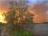 :: Trees ::