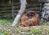 Cincinnati Zoo Oct 2012_198.JPG