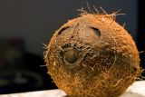 I'm just a Coconut!