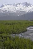 Exit Glacier area
