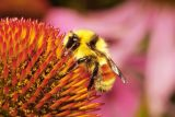 Bees/Insects and Flowers