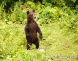 Fish Creek: bear